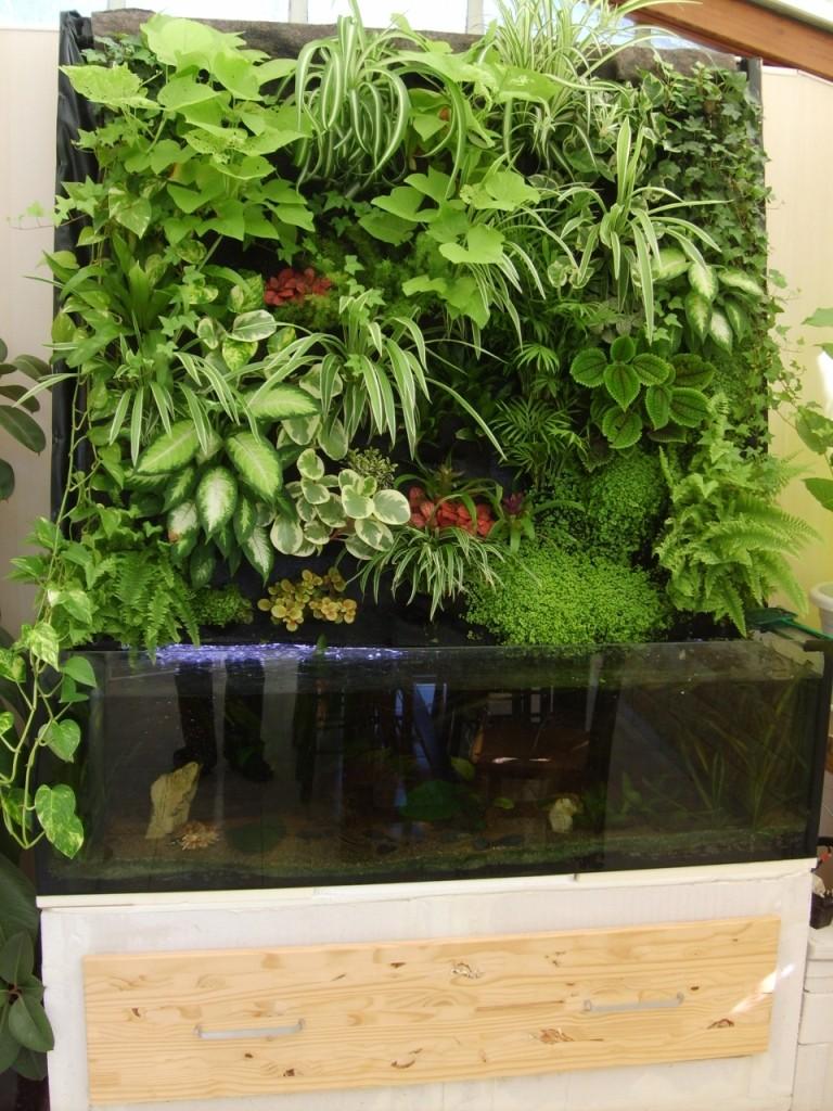 mur végétal+aquarium 11-ras10