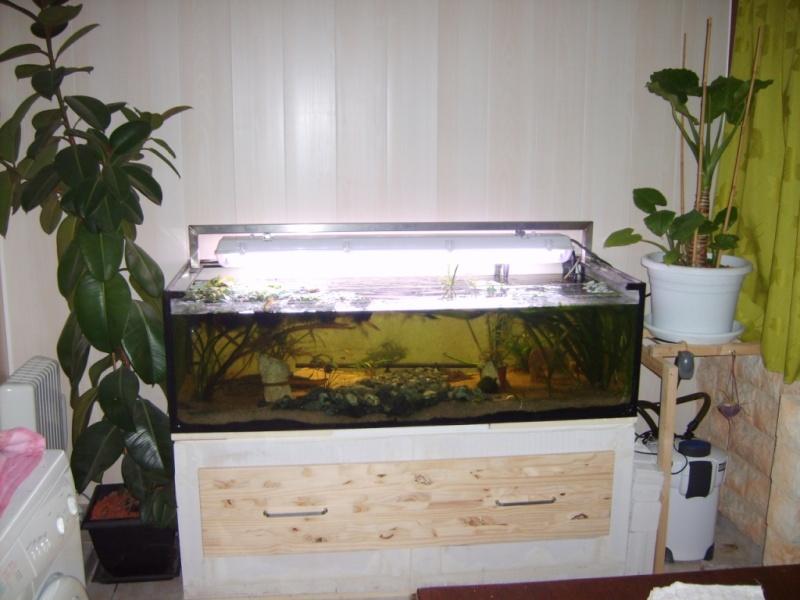 mur végétal+aquarium 5-acla11