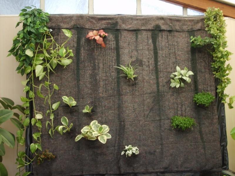 mur végétal+aquarium 8-aqua10