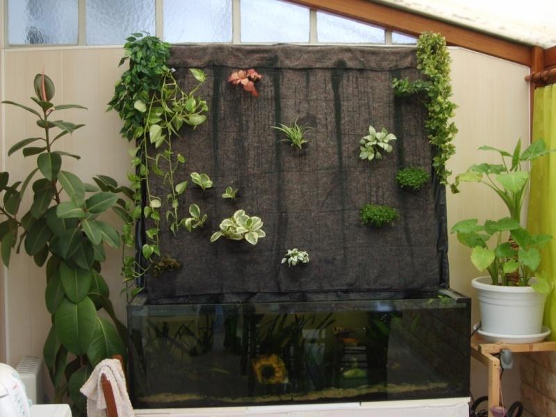 mur végétal+aquarium 9-irru10