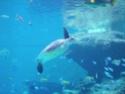 [Visite] Japon : Churaumi Suizokukan (Aquarium d'Okinawa) Dscn6817