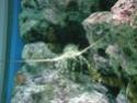 [Visite] Japon : Churaumi Suizokukan (Aquarium d'Okinawa) Dscn6820