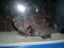 [Visite] Japon : Churaumi Suizokukan (Aquarium d'Okinawa) Dscn6824