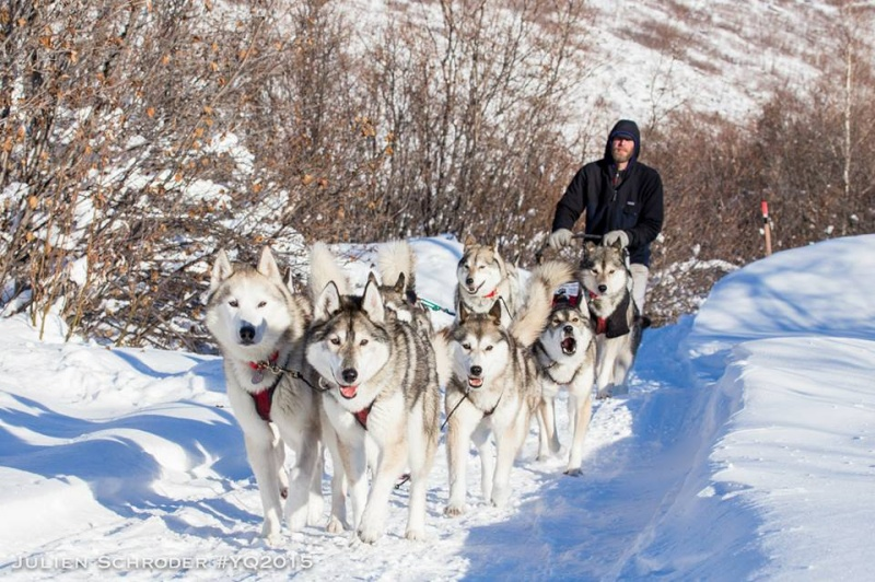 YUKON QUEST 2015 - Page 2 Mike_110