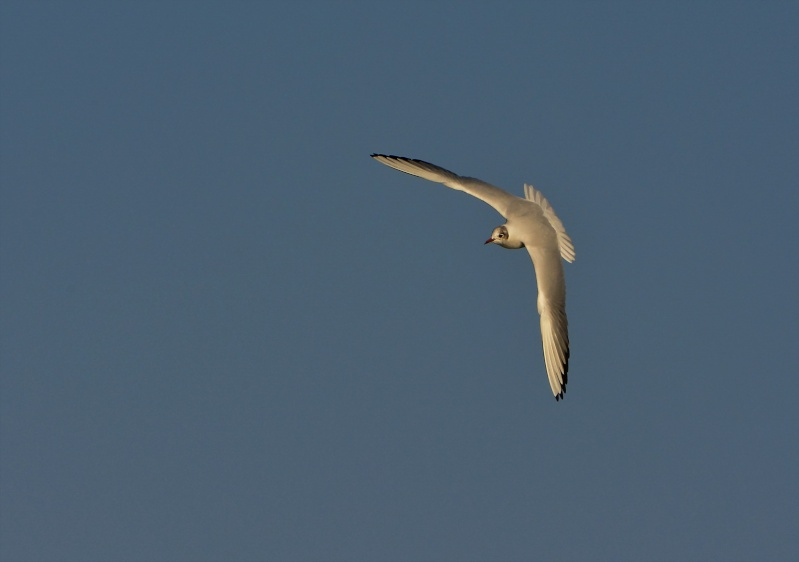 Mouettes. 2015-030