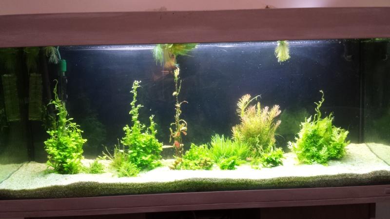 mon 240L planté - Page 2 Aqua10