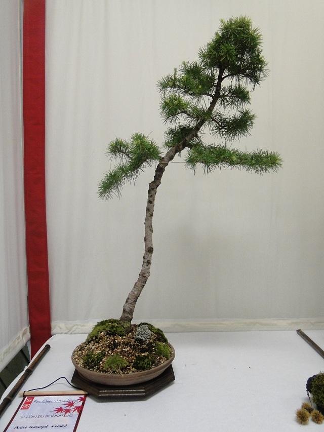 re:maulévrier(49)22°salon du bonsai 8et9septembre 2012 - Page 2 00111