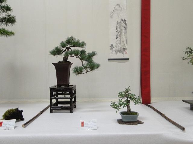 re:maulévrier(49)22°salon du bonsai 8et9septembre 2012 - Page 2 00211