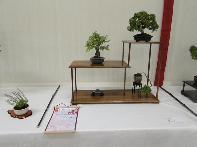 re:maulévrier(49)22°salon du bonsai 8et9septembre 2012 - Page 2 00412