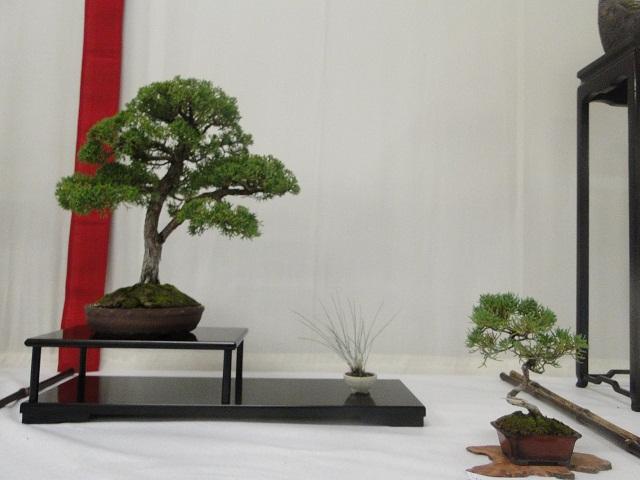 re:maulévrier(49)22°salon du bonsai 8et9septembre 2012 - Page 2 00513