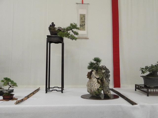 re:maulévrier(49)22°salon du bonsai 8et9septembre 2012 - Page 2 00615