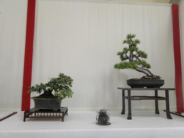 re:maulévrier(49)22°salon du bonsai 8et9septembre 2012 - Page 2 00711
