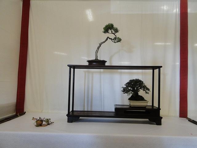 re:maulévrier(49)22°salon du bonsai 8et9septembre 2012 - Page 3 00813