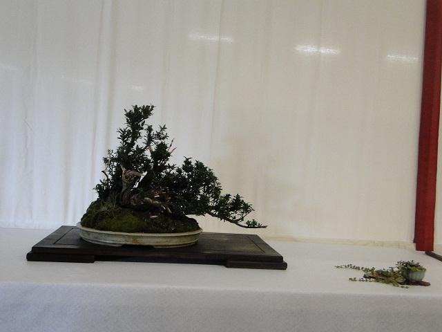 re:maulévrier(49)22°salon du bonsai 8et9septembre 2012 - Page 3 01010