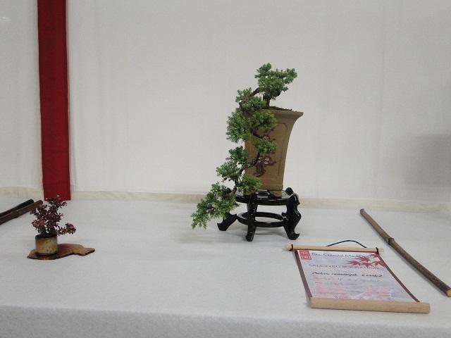 re:juniperus procumbens nana  01111