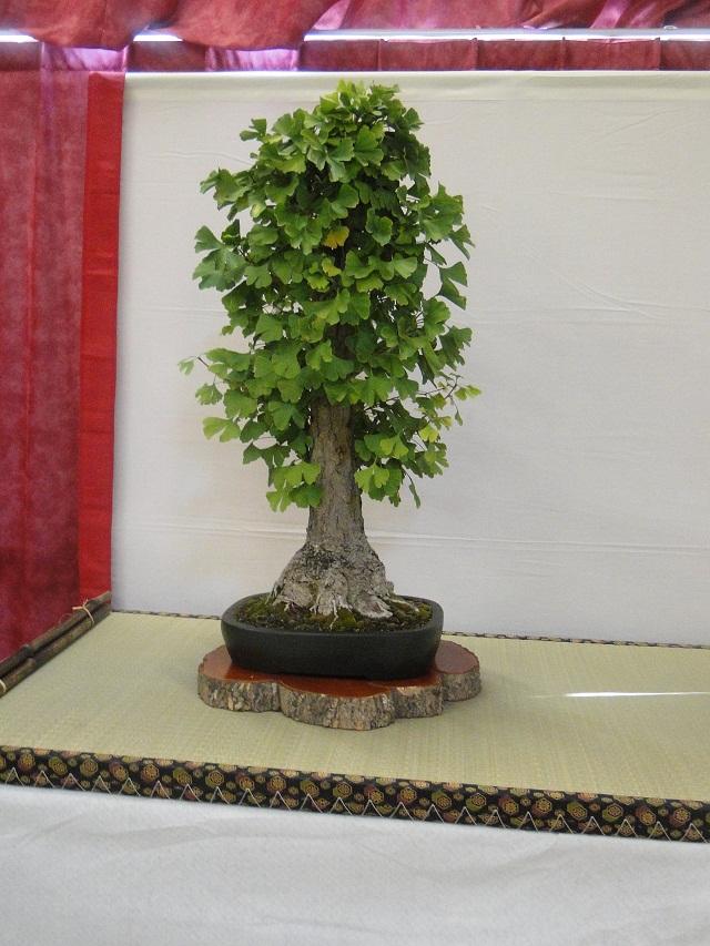re:maulévrier(49)22°salon du bonsai 8et9septembre 2012 01510
