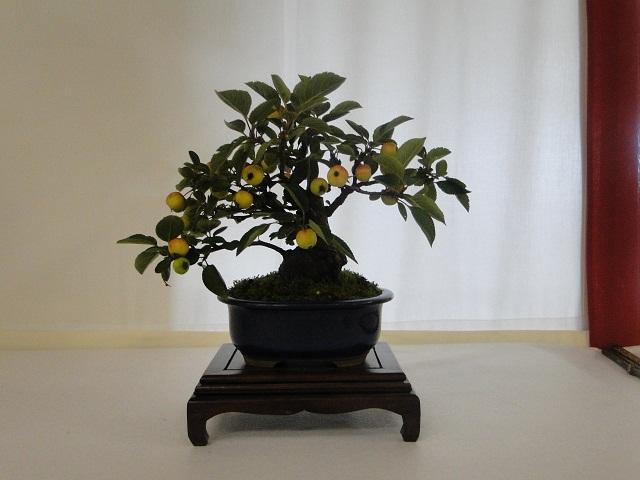 re:maulévrier(49)22°salon du bonsai 8et9septembre 2012 - Page 2 02110