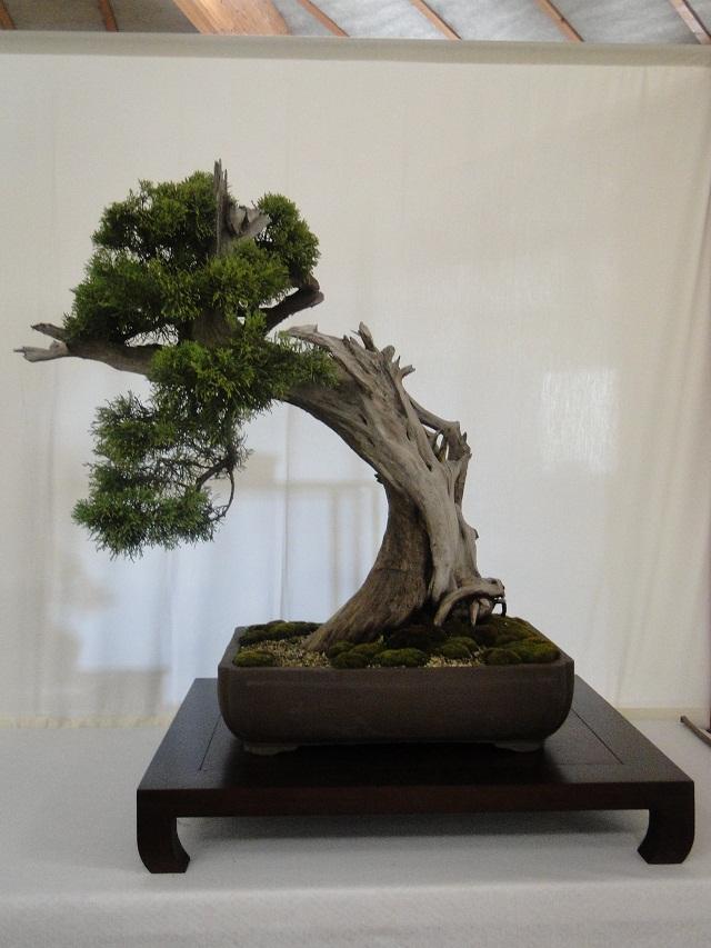 re:maulévrier(49)22°salon du bonsai 8et9septembre 2012 02210