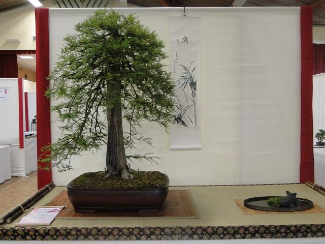 re:maulévrier(49)22°salon du bonsai 8et9septembre 2012 02310