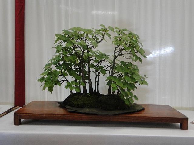 re:maulévrier(49)22°salon du bonsai 8et9septembre 2012 - Page 3 02610