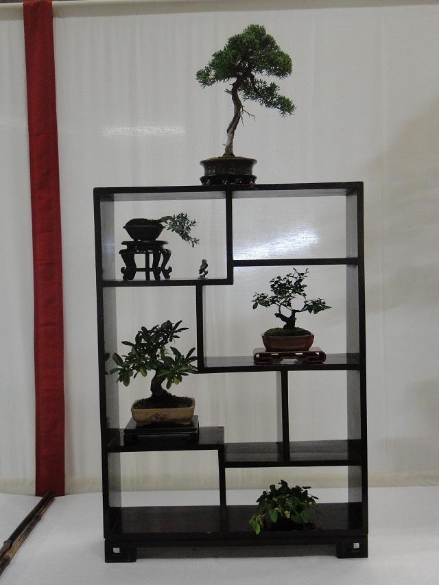 re:maulévrier(49)22°salon du bonsai 8et9septembre 2012 02710