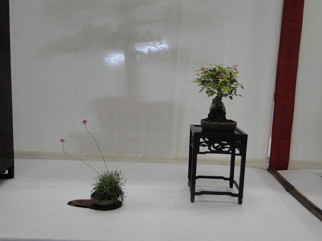 re:maulévrier(49)22°salon du bonsai 8et9septembre 2012 - Page 3 02810