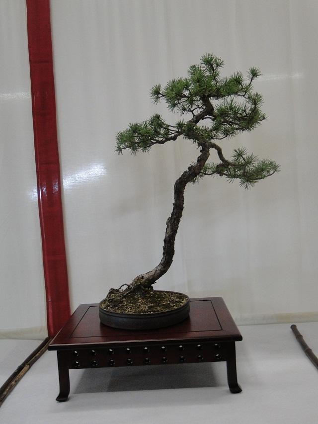 re:maulévrier(49)22°salon du bonsai 8et9septembre 2012 - Page 3 02910