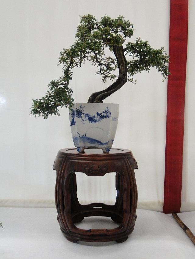 re:maulévrier(49)22°salon du bonsai 8et9septembre 2012 03010