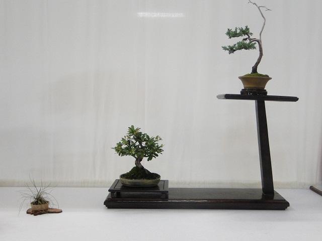 re:maulévrier(49)22°salon du bonsai 8et9septembre 2012 03310