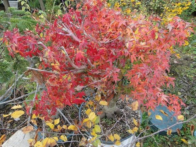 couleurs d'automne 03511