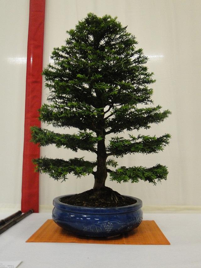 re:maulévrier(49)22°salon du bonsai 8et9septembre 2012 - Page 2 03710