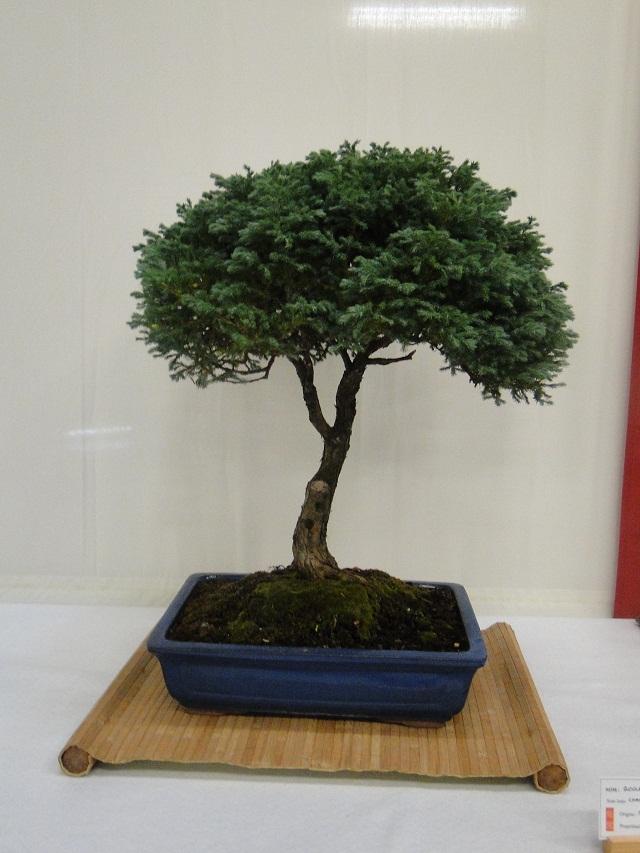 re:maulévrier(49)22°salon du bonsai 8et9septembre 2012 - Page 3 04010