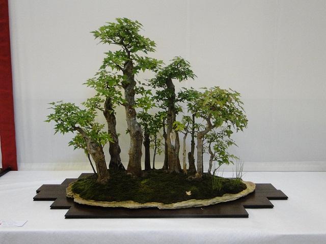 re:maulévrier(49)22°salon du bonsai 8et9septembre 2012 - Page 2 04510