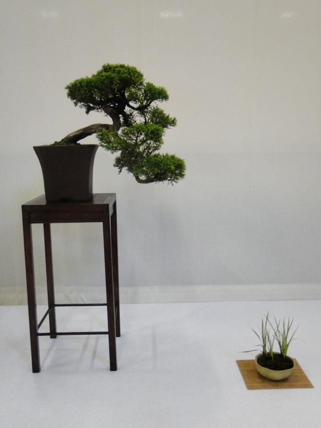 re:maulévrier(49)22°salon du bonsai 8et9septembre 2012 04710