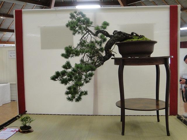 re:maulévrier(49)22°salon du bonsai 8et9septembre 2012 04810