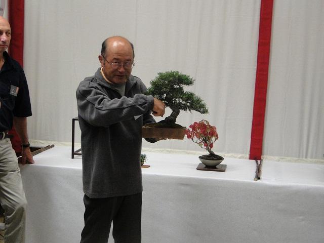 re:maulévrier(49)22°salon du bonsai 8et9septembre 2012 05110