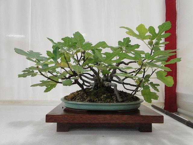 re:maulévrier(49)22°salon du bonsai 8et9septembre 2012 - Page 3 05210