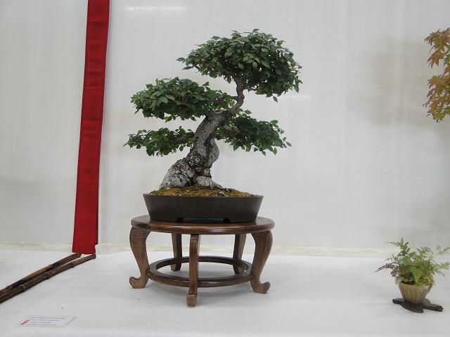 re:maulévrier(49)22°salon du bonsai 8et9septembre 2012 - Page 3 05712