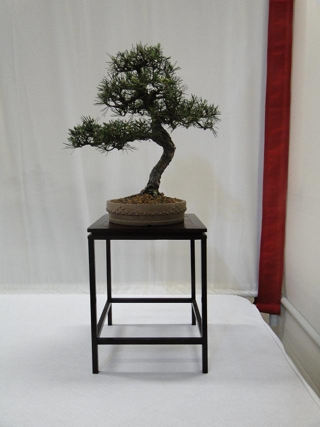 re:maulévrier(49)22°salon du bonsai 8et9septembre 2012 06110