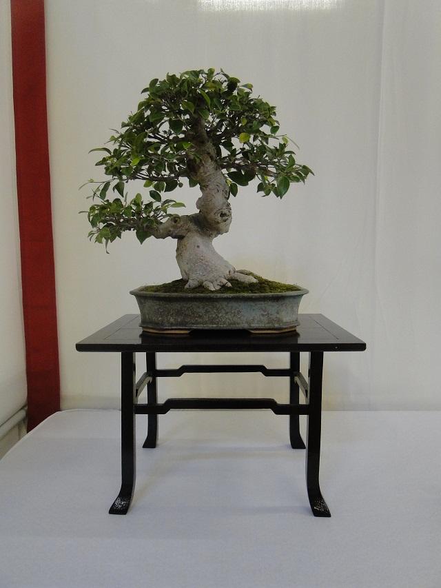re:maulévrier(49)22°salon du bonsai 8et9septembre 2012 - Page 3 06911
