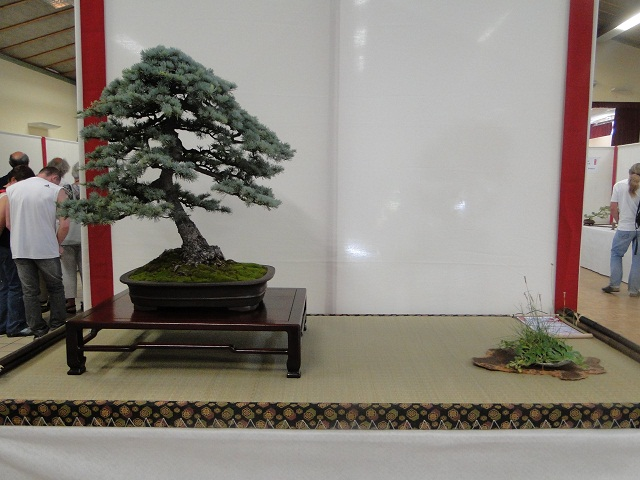 re:maulévrier(49)22°salon du bonsai 8et9septembre 2012 07010