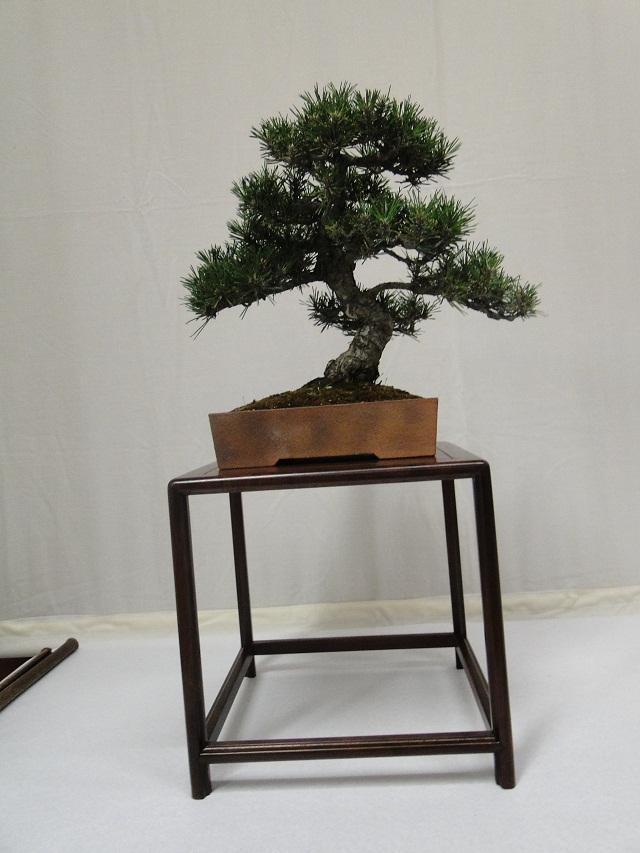 re:maulévrier(49)22°salon du bonsai 8et9septembre 2012 - Page 3 07111