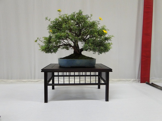 re:maulévrier(49)22°salon du bonsai 8et9septembre 2012 - Page 3 07410