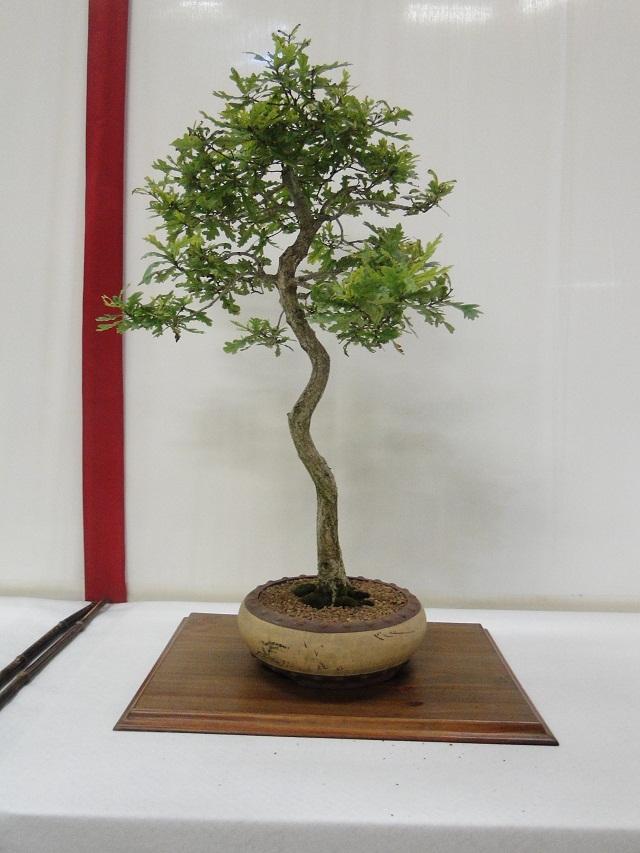 re:maulévrier(49)22°salon du bonsai 8et9septembre 2012 - Page 3 08210