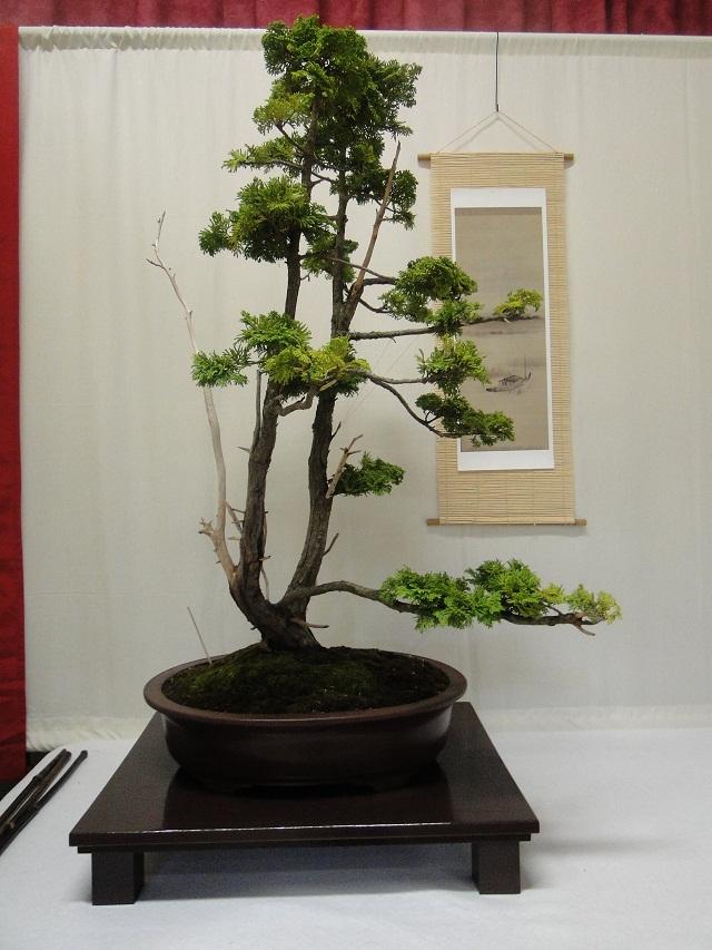 re:maulévrier(49)22°salon du bonsai 8et9septembre 2012 - Page 3 08511
