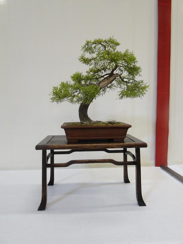 re:maulévrier(49)22°salon du bonsai 8et9septembre 2012 - Page 2 10010
