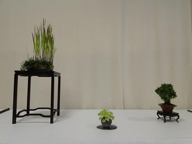 re:maulévrier(49)exposition de kusamono 8et9 septembre 2012 11310