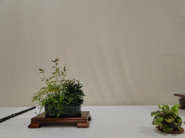 re:maulévrier(49)exposition de kusamono 8et9 septembre 2012 11610
