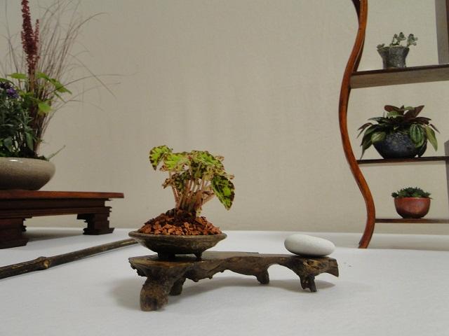 re:maulévrier(49)exposition de kusamono 8et9 septembre 2012 11910