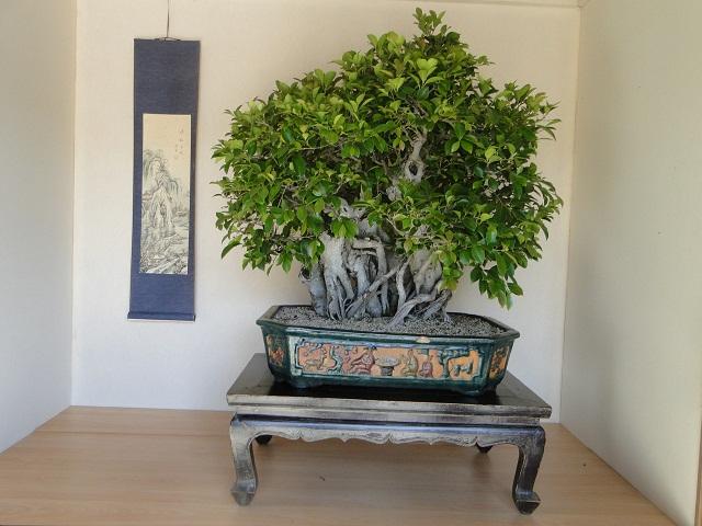 re:maulévrier(49)22°salon du bonsai 8et9septembre 2012 - Page 2 13810